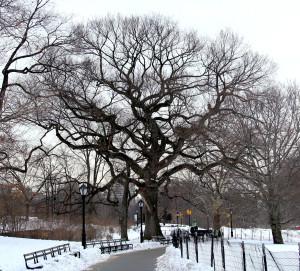 Winter tree 10