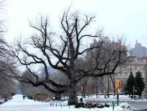 Winter tree 9
