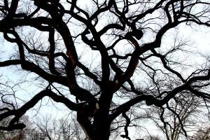 winter tree 7