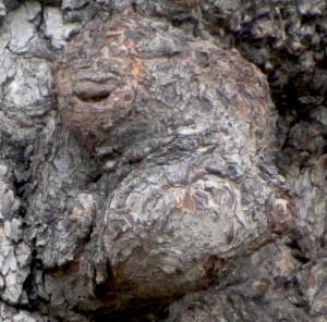 Sour tree 2